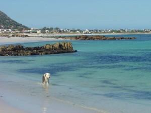 blue sea ocean view Long beach kommetjie dog friendly